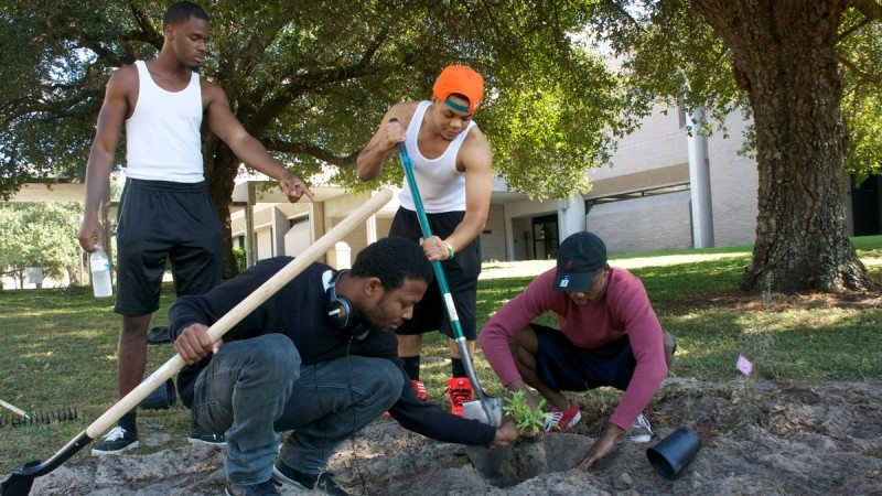 Students in Introduction to Environmental Science spent Monday afternoon planting rain gardens around campus at Polk State Winter Haven. From left, Patrick Gustave, Pierre Milorme, Peter Valmont and Wislly Alexis work on a garden near the Administration Building.