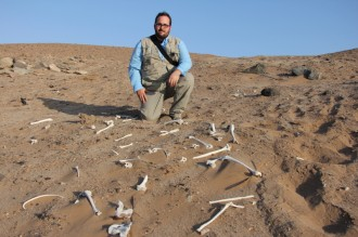 Patrick Phillips, a Polk State-trained radiographer, recently went to Peru to take X-rays of mummies as old as 4,000 years. Here, he is shown with human bones scattered in the desert of southern Peru.